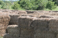 The hay maze at Arrows Family Farm near Seminole, Oklahoma.